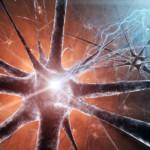 Fysiotherapie helpt achteruitgang van spierfuncties beperken